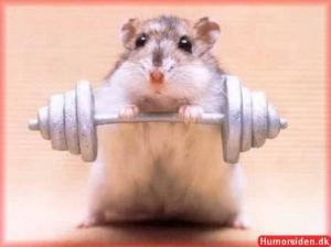 hamsterstrong